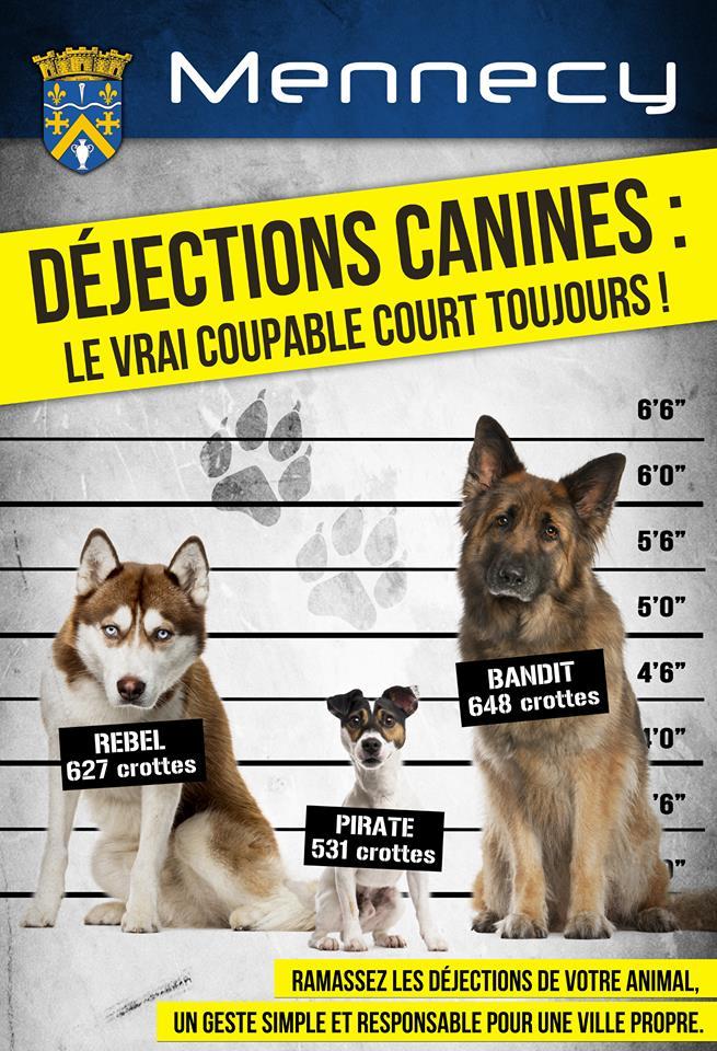 affiche_chiens.jpg